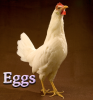 Food: eggs (White Leghorn)