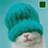Кот в той самой зеленой шапке :)