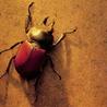 gershgorin userpic