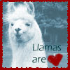 llamas are love