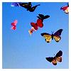 butterflies by carnifinda