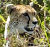 Scary Rob: Serengeti Duma