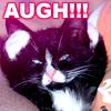 *augh* - kitten