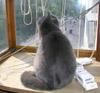 Кошка Полосатая