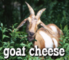Food: goat cheese