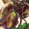 moleskine lilacs leaves