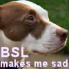 BSL sad