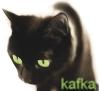kafka cat