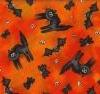 noirchat: orange