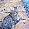 thumpercat1982 userpic
