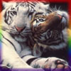 tiger_officer userpic