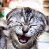 lildevilchiq userpic
