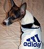 Kyky's Diary: Adidog