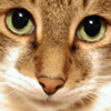 davl_m userpic