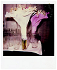 flowers polaroid