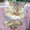 ginkth userpic