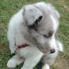 Luna Puppy