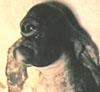 hambushed userpic