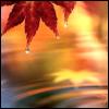 pretty: leaf reflection