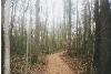 woodsywild
