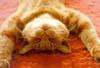 lazy__cat userpic