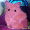 hamster_pink userpic