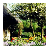 england // cottage garden