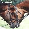ima_horselover userpic