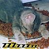 רותם שחר (Ro): zzzz kitty