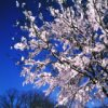 ceiling_taffi userpic
