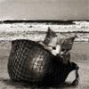 Cat in military helmet.