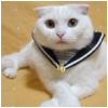 Cute (Cat)