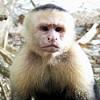 monkey isaw