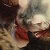 empress_bunn userpic