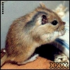 the oncoming whirlwind: gerbil: kat - cleaning xxx