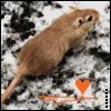 the oncoming whirlwind: gerbil: kat - on <s>ice</s>snow heart
