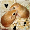 the oncoming whirlwind: gerbil: kat - couple