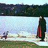 spy pond, geese, arlington
