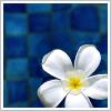 zuzi userpic