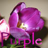 purpletulips49 userpic