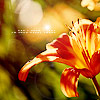 gen: tiger lilies