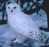 snowyfriend userpic