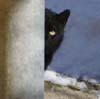 she_cat_8