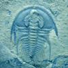 trilobites userpic