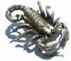 grey_scorpion userpic