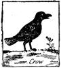 ka_crow