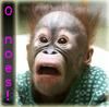 quasadu: o noes!