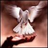 pretty: bird in hand