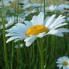 daisy22 userpic