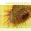 sunflower helleboredoll